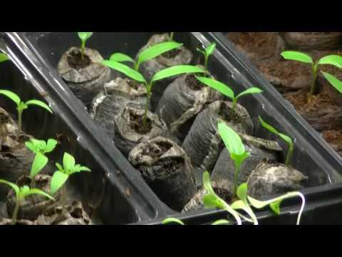 Grow Room Up & Running | Look At Seedlings