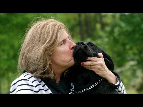 Guide dogs get to know a new voice: Alexa