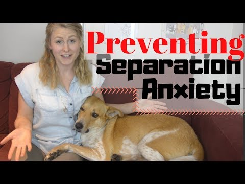 PREVENT SEPARATION ANXIETY IN YOUR DOG | InRuffCompany.com