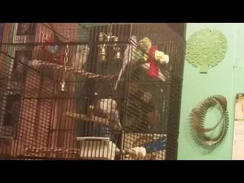 Birds fighting part 2
