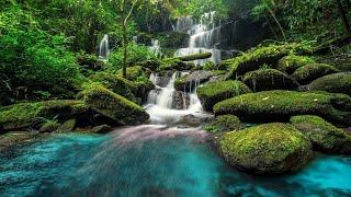 Relaxing Piano Music: Sleep Music, Water Sounds, Meditation Music, Relaxing Music ★45🍀