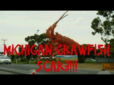 MICHIGAN CRAWFISH SCARE
