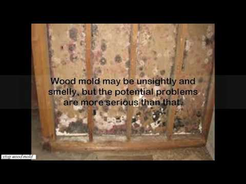how to treat mold on wood