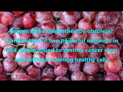 Grapes make chemotherapy obsolete Combination of two powerful nutrients in wild grapes found to dest