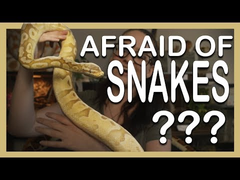 AFRAID OF SNAKES?? Here's why you shouldn't be!
