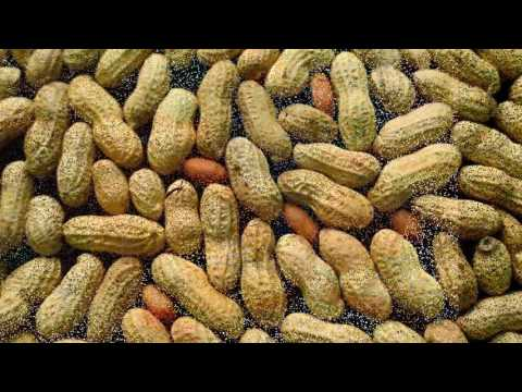 Give peanut to babies early to prevent allergies