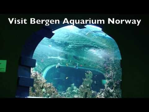 Building a 100.000 liter Reef Ceramic Tunnel Aquarium