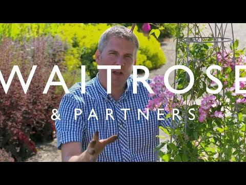 Matt James Plants Edible Window Boxes | Waitrose Garden