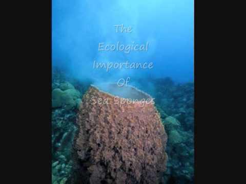 Sea Sponges Under The Sea