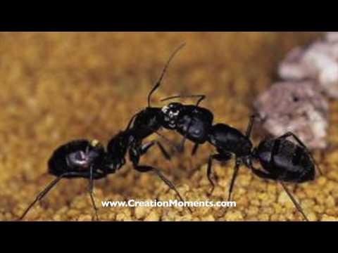 Ants Play Red Light Green Light