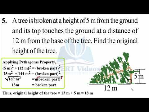 The Triangle and its Properties 6.5