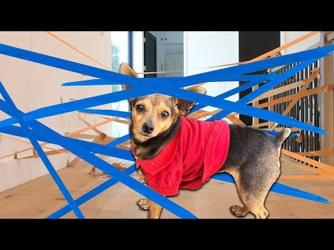 We Made a Diy Laser Maze for Our Dogs Challenge! (Learn How to Make Fun Activities While Bored)