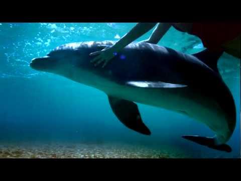 Quintana Roo: Riviera Maya, Holbox and more | Bicentennial Celebrations