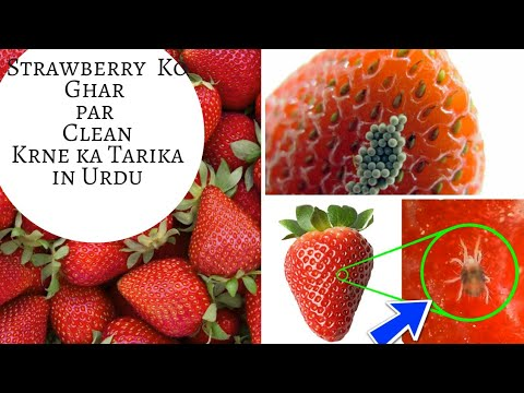 How to clean strawbery bug at home||strawbery ko ghar pr kse clean aur store kse krte hn. 2018