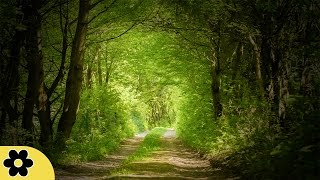 Music for Studying, Relaxing Music, Music for Stress Relief, Focus Music, Background Music, ✿3127C