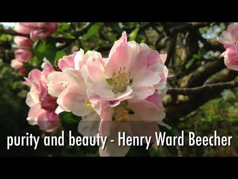 Do You Love Beautiful Blossom?