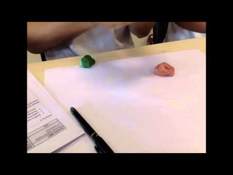 3D Brain clay model