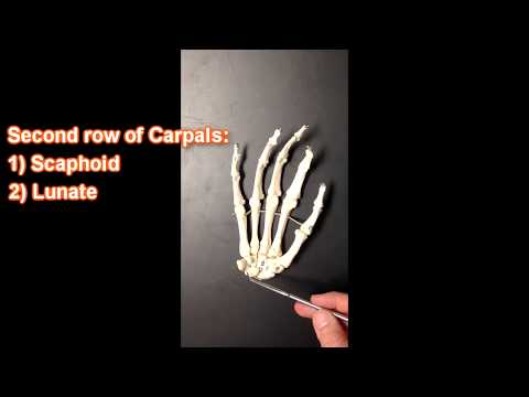 Bones and Structures of the Wrist and Hand