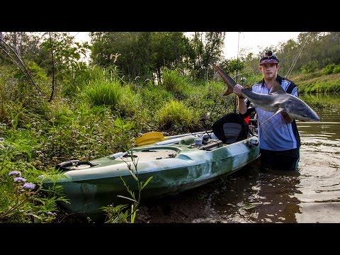 Brisbane River Freshwater Bull Shark