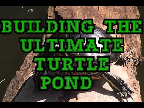 BUILDING THE ULTIMATE OUTDOOR TURTLE POND- PHASE 1: MY NEW OUTDOOR TURTLE POND SET UP
