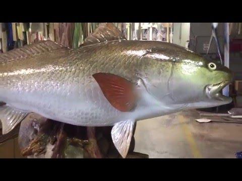Redfish on custom  Sand ball base - Gray Taxidermy Fishmounts, Custom fish reproductions