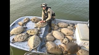 Hypothermic sea turtles rescued during cold snap