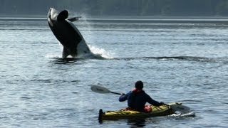Amazing Orca Dolphins leap from the water - Deadly 60 - Series 2 - BBC