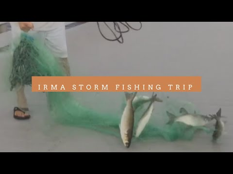 Cast net fishing before monster Irma storm