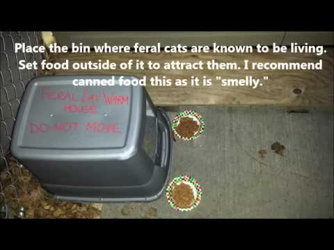 How to Build a Feral Cat Warm House