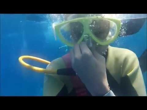 Snuba Diving In Maui, Hawaii