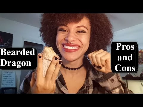 Pros and Cons Of Owning A Bearded Dragon