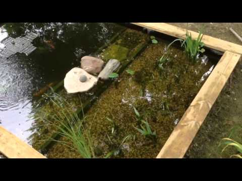 best koi pond design, take 2
