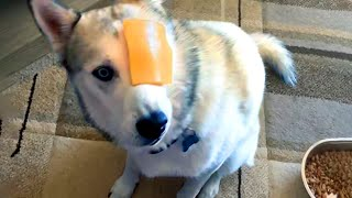 Silly Dogs to Make You Laugh  | Funny Pet Videos