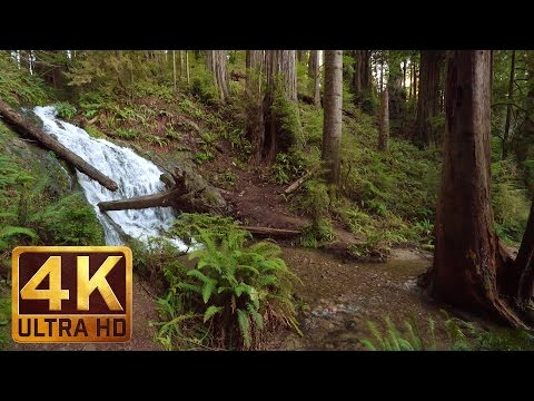 2.5 HRS Virtual Nature Walk in the Redwood National and State Parks in 4K Ultra HD - Part 1