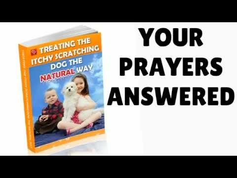 ITCHY DOG HOME REMEDIES