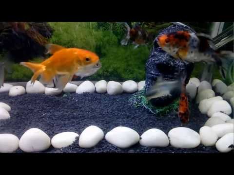 how to keep aquarium fish tank water clean in Hindi