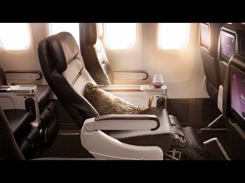 Relajate en la clase Premium Economy de Air New Zealand