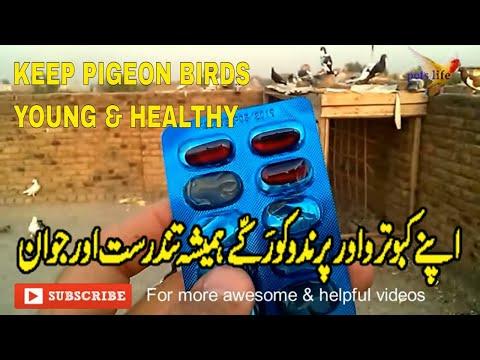 Keep Pigeons Birds chicken Healthy Young & energetic