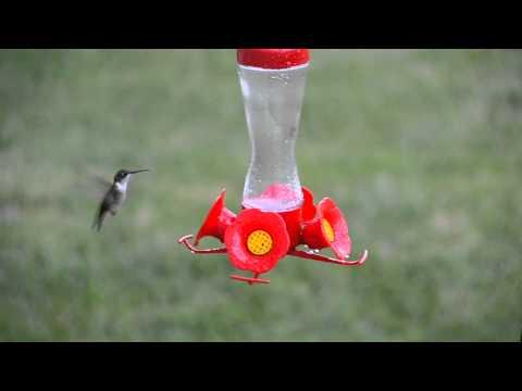 JSchmitt Crazy Humming Birds HD