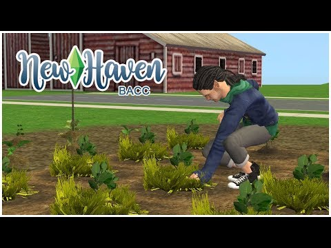 Let's Play The Sims 2 Ultimate Collection ||  New Haven || 4 || Dreaming of Garden Club