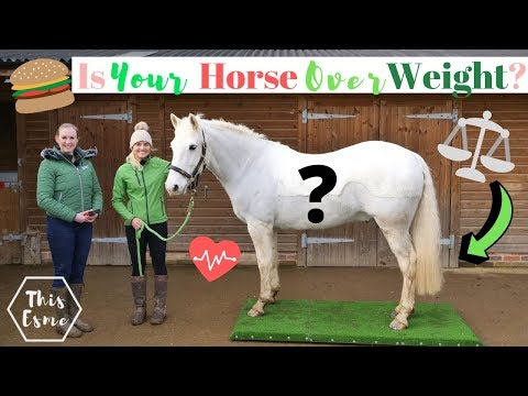 Xxx Mp4 Is Your Horse Over Or Under Weight This Esme 3gp Sex