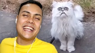 this UGLY cat keeps coming to my house (Reacting To Memes)