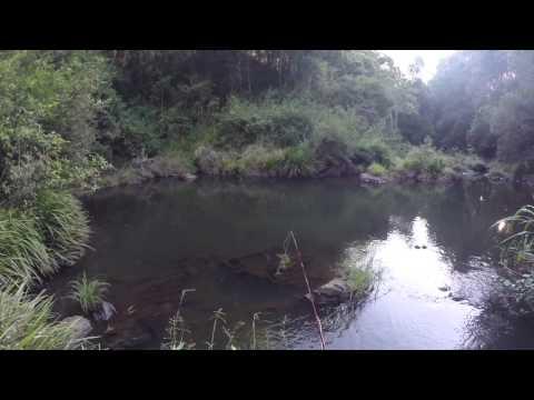 Fly Fishing Australia - Carp On Fly