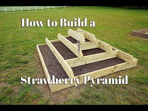 How to build a Strawberry Pyramid