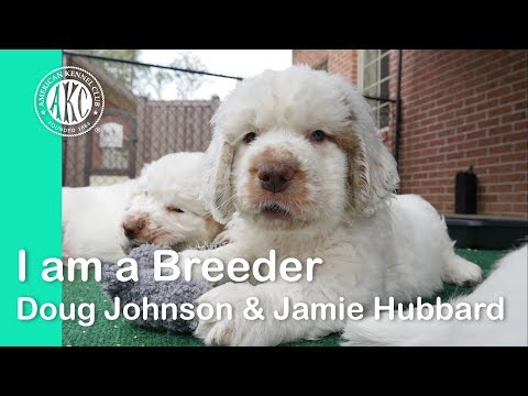 I am a Breeder- Doug Johnson & Jamie Hubbard - Clussexx Kennels