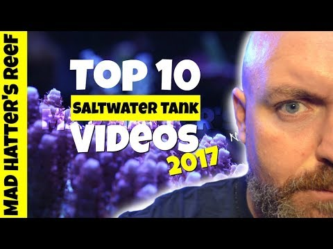 Top 10 Saltwater Tank Videos of 2017