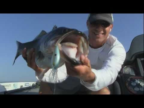 Lake Fork Guide Bass Fishing Report - How To Catch Big Bass w Crankbaits Jigs and Texas rigs