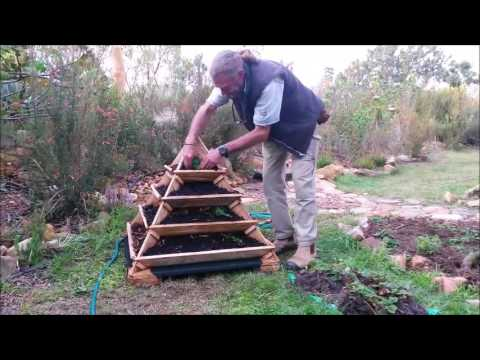 Planting strawberries in the Amazing Pyramid Planter