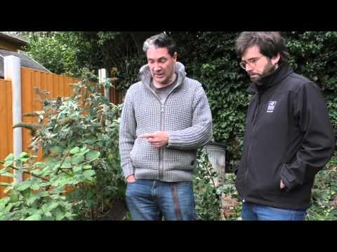 A guided tour of a hedgehog friendly garden