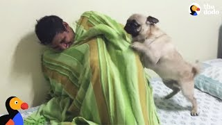 Pug Dog FREAKS OUT After Reunited With Hiding Uncle | The Dodo